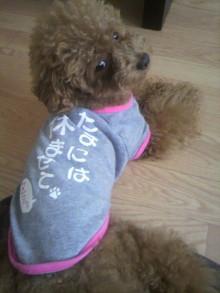 愛犬鈴ちゃん~トイプードル☆ライフスタイル~-2011080114250000.jpg