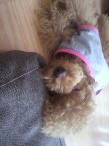 愛犬鈴ちゃん~トイプードル☆ライフスタイル~-2011080114250001.jpg
