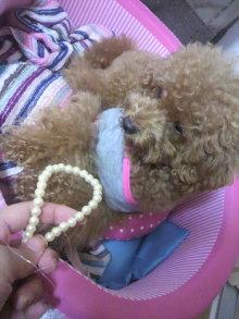 愛犬鈴ちゃん~トイプードル☆ライフスタイル~-2011080118270000.jpg