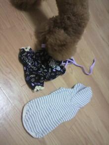 愛犬鈴ちゃん~トイプードル☆ライフスタイル~-2011080222460001.jpg