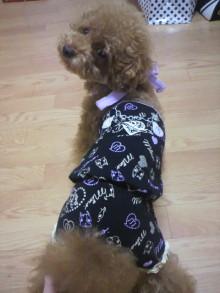 愛犬鈴ちゃん~トイプードル☆ライフスタイル~-2011080222500000.jpg