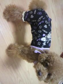 愛犬鈴ちゃん~トイプードル☆ライフスタイル~-2011080222500001.jpg