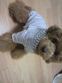 愛犬鈴ちゃん~トイプードル☆ライフスタイル~-2011080222470001.jpg