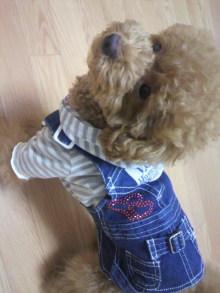 愛犬鈴ちゃん~トイプードル☆ライフスタイル~-2011080222550000.jpg