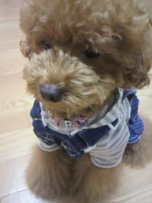 愛犬鈴ちゃん~トイプードル☆ライフスタイル~-2011080222550001.jpg