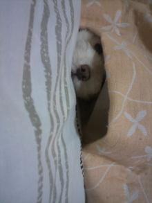 愛犬鈴ちゃん~トイプードル☆ライフスタイル~-2011080622420001.jpg