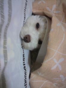 愛犬鈴ちゃん~トイプードル☆ライフスタイル~-2011080622420002.jpg