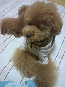 愛犬鈴ちゃん~トイプードル☆ライフスタイル~-2011080622430001.jpg