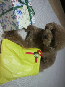 愛犬鈴ちゃん~トイプードル☆ライフスタイル~-2011081019080000.jpg