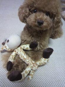 愛犬鈴ちゃん~トイプードル☆ライフスタイル~-2011081019080001.jpg