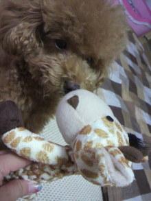 愛犬鈴ちゃん~トイプードル☆ライフスタイル~-2011081019090000.jpg