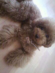 愛犬鈴ちゃん~トイプードル☆ライフスタイル~-2011081308370000.jpg