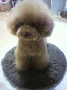愛犬鈴ちゃん~トイプードル☆ライフスタイル~-2011081422520003.jpg