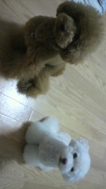 愛犬鈴ちゃん~トイプードル☆ライフスタイル~-2011081518060000.jpg