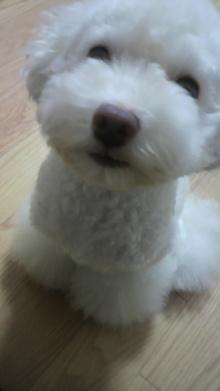 愛犬鈴ちゃん~トイプードル☆ライフスタイル~-2011081518080000.jpg