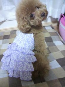 愛犬鈴ちゃん~トイプードル☆ライフスタイル~-2011081618310000.jpg
