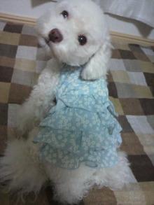 愛犬鈴ちゃん~トイプードル☆ライフスタイル~-2011081618310001.jpg