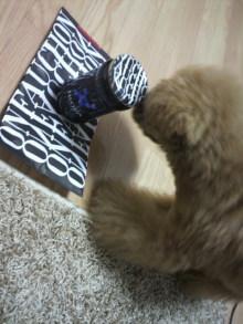 愛犬鈴ちゃん~トイプードル☆ライフスタイル~-2011081618510000.jpg