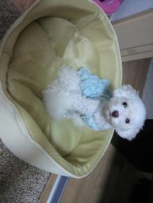 愛犬鈴ちゃん~トイプードル☆ライフスタイル~-2011081618300001.jpg