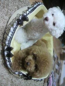 愛犬鈴ちゃん~トイプードル☆ライフスタイル~-2011081620090000.jpg