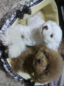 愛犬鈴ちゃん~トイプードル☆ライフスタイル~-2011081620090001.jpg