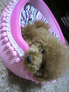 愛犬鈴ちゃん~トイプードル☆ライフスタイル~-2011081623120000.jpg