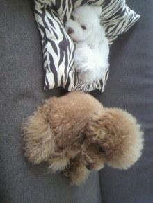 愛犬鈴ちゃん~トイプードル☆ライフスタイル~-2011081709190001.jpg