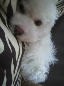 愛犬鈴ちゃん~トイプードル☆ライフスタイル~-2011081709190000.jpg