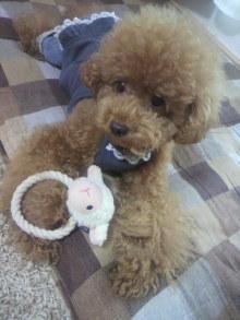 愛犬鈴ちゃん~トイプードル☆ライフスタイル~-2011082010490000.jpg
