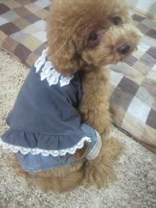 愛犬鈴ちゃん~トイプードル☆ライフスタイル~-2011082010500001.jpg