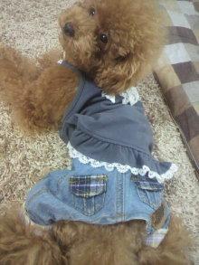 愛犬鈴ちゃん~トイプードル☆ライフスタイル~-2011082010510000.jpg