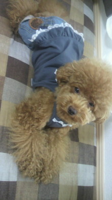 愛犬鈴ちゃん~トイプードル☆ライフスタイル~-2011082011010002.jpg