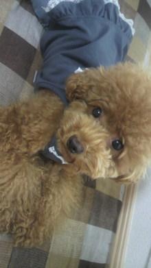 愛犬鈴ちゃん~トイプードル☆ライフスタイル~-2011082011020000.jpg