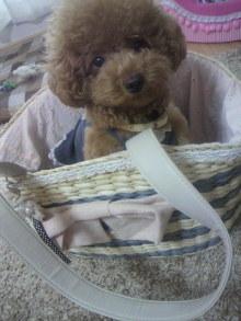 愛犬鈴ちゃん~トイプードル☆ライフスタイル~-2011082011160000.jpg