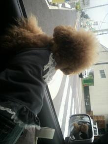 愛犬鈴ちゃん~トイプードル☆ライフスタイル~-2011082011330000.jpg