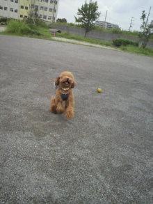 愛犬鈴ちゃん~トイプードル☆ライフスタイル~-2011082012590002.jpg