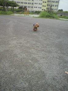 愛犬鈴ちゃん~トイプードル☆ライフスタイル~-2011082013000000.jpg