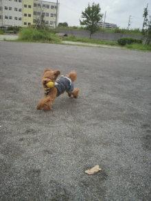 愛犬鈴ちゃん~トイプードル☆ライフスタイル~-2011082013000002.jpg