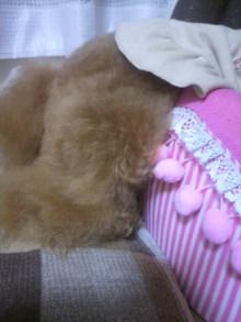 愛犬鈴ちゃん~トイプードル☆ライフスタイル~-2011082101400002.jpg