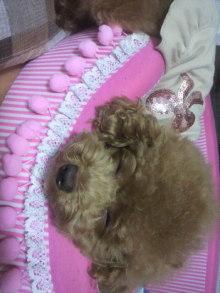 愛犬鈴ちゃん~トイプードル☆ライフスタイル~-2011082101410000.jpg