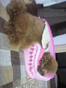 愛犬鈴ちゃん~トイプードル☆ライフスタイル~-2011082101420001.jpg