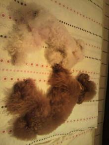 愛犬鈴ちゃん~トイプードル☆ライフスタイル~-2011082222110002.jpg