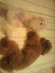 愛犬鈴ちゃん~トイプードル☆ライフスタイル~-2011082222100000.jpg