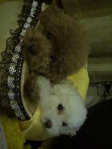 愛犬鈴ちゃん~トイプードル☆ライフスタイル~-2011082221090001.jpg