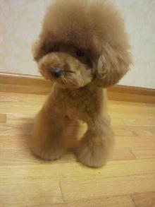 愛犬鈴ちゃん~トイプードル☆ライフスタイル~-2011082319510000.jpg