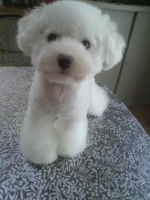 愛犬鈴ちゃん~トイプードル☆ライフスタイル~-2011082411270000.jpg