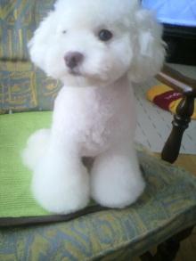 愛犬鈴ちゃん~トイプードル☆ライフスタイル~-2011082411290000.jpg