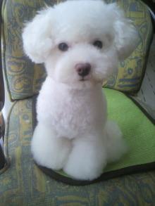 愛犬鈴ちゃん~トイプードル☆ライフスタイル~-2011082411290001.jpg