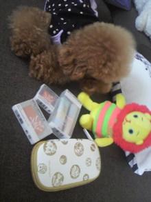 愛犬鈴ちゃん~トイプードル☆ライフスタイル~-2011082711270000.jpg