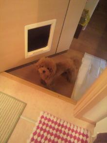 愛犬鈴ちゃん~トイプードル☆ライフスタイル~-2011082916550000.jpg